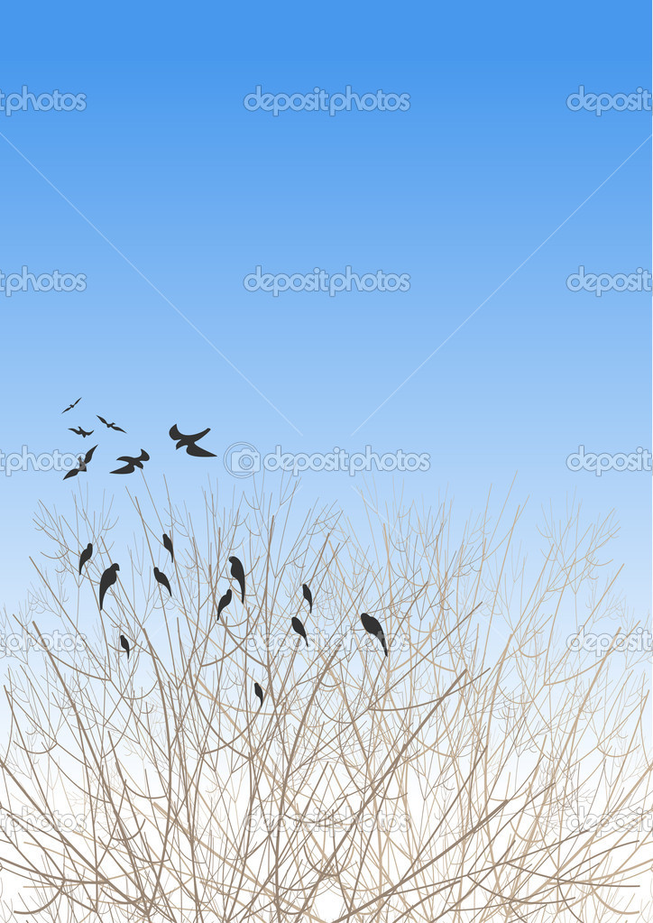 A flock of rooks