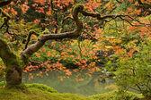 podzim na japonská zahrada 2