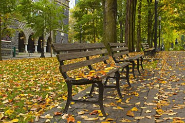 Fall Leaves on Benches Along Park 3