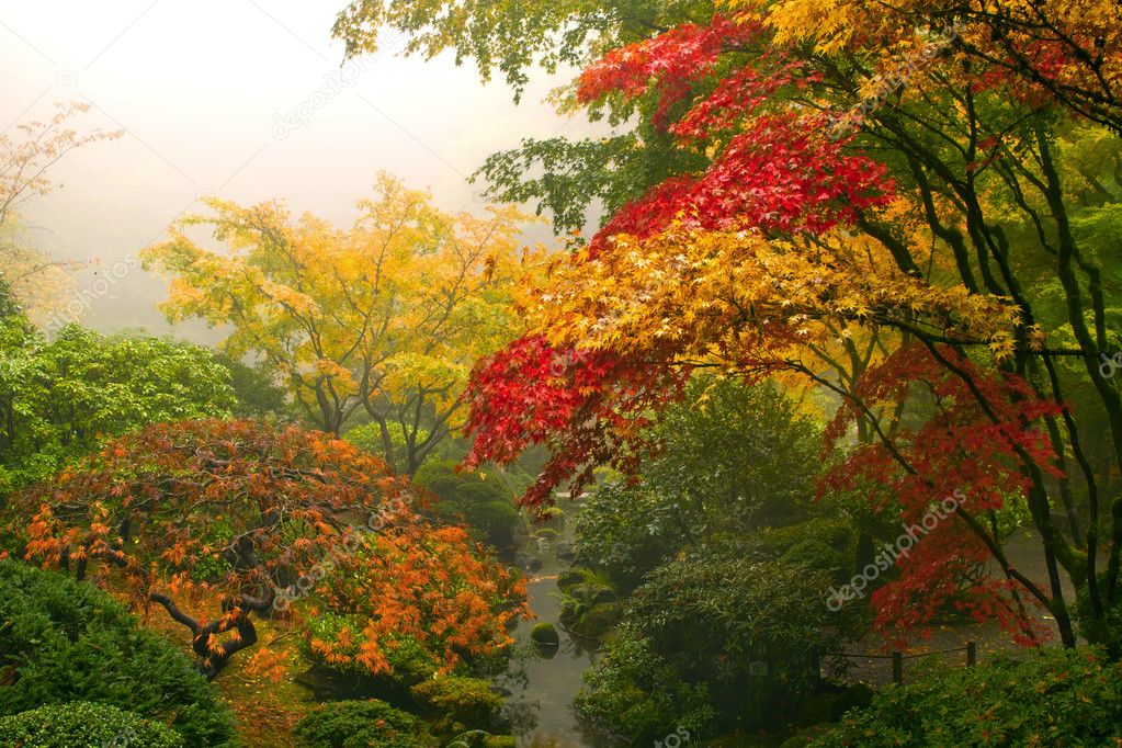 Japanese Maple Trees in the Fall