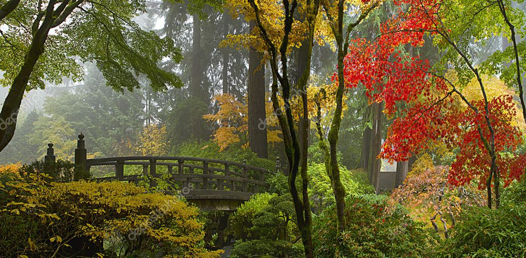 Wooden Bridge at Japanese Garden in Autumn Panorama