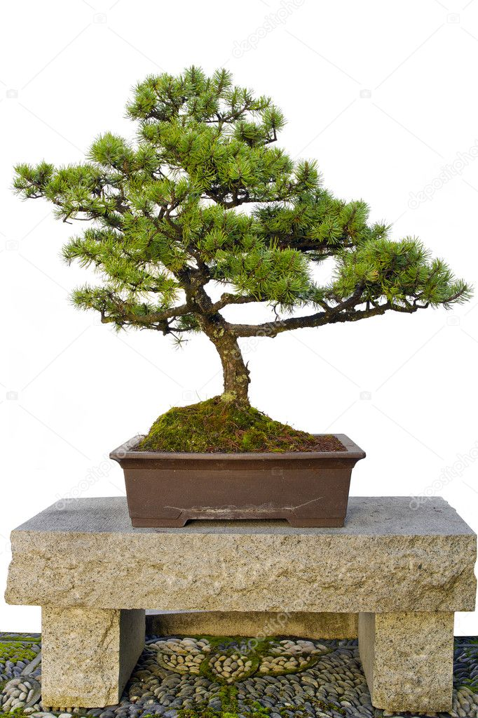 Bonsai Tree Sitting on Stone Bench in Chinese Garden