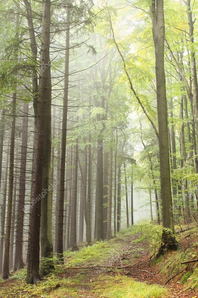 Beautiful early autumn forest