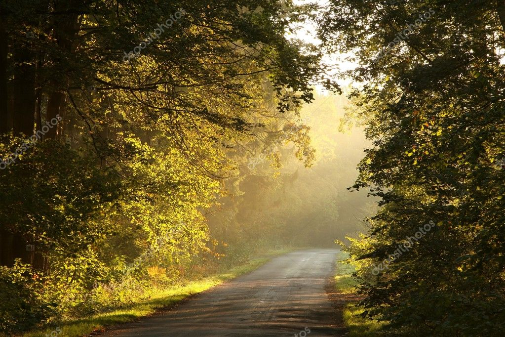Path in a misty autumn forest at sunrise