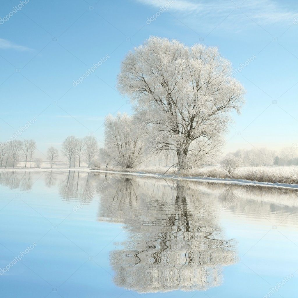 Landscape of frosted trees in the morning
