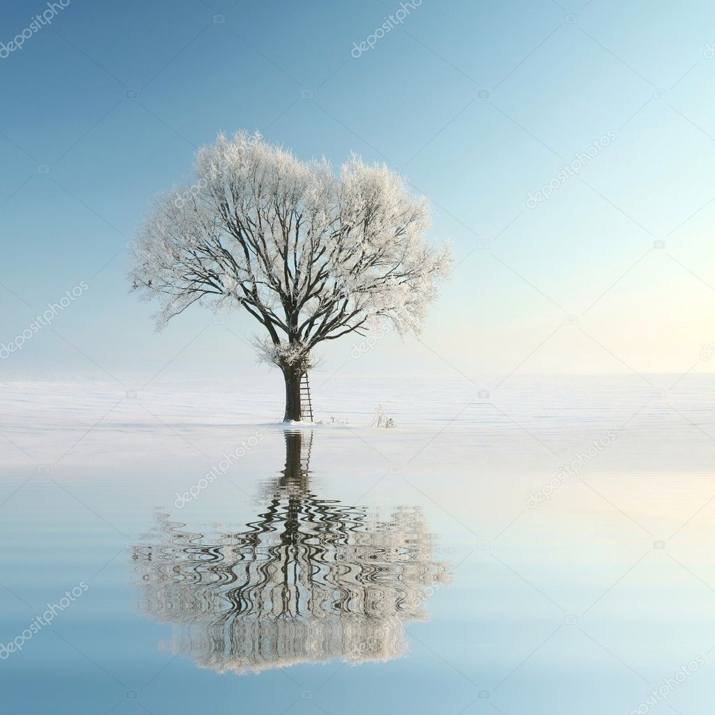Lonely winter tree on the lake shore