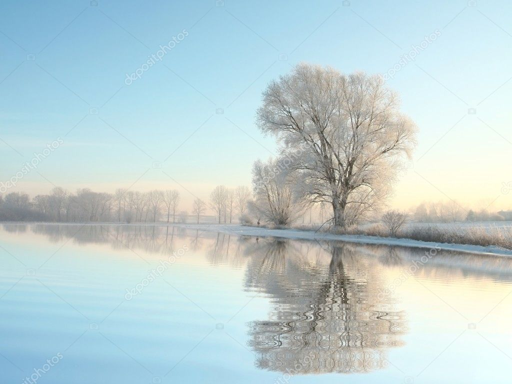 Winter landscape of frozen trees at dawn