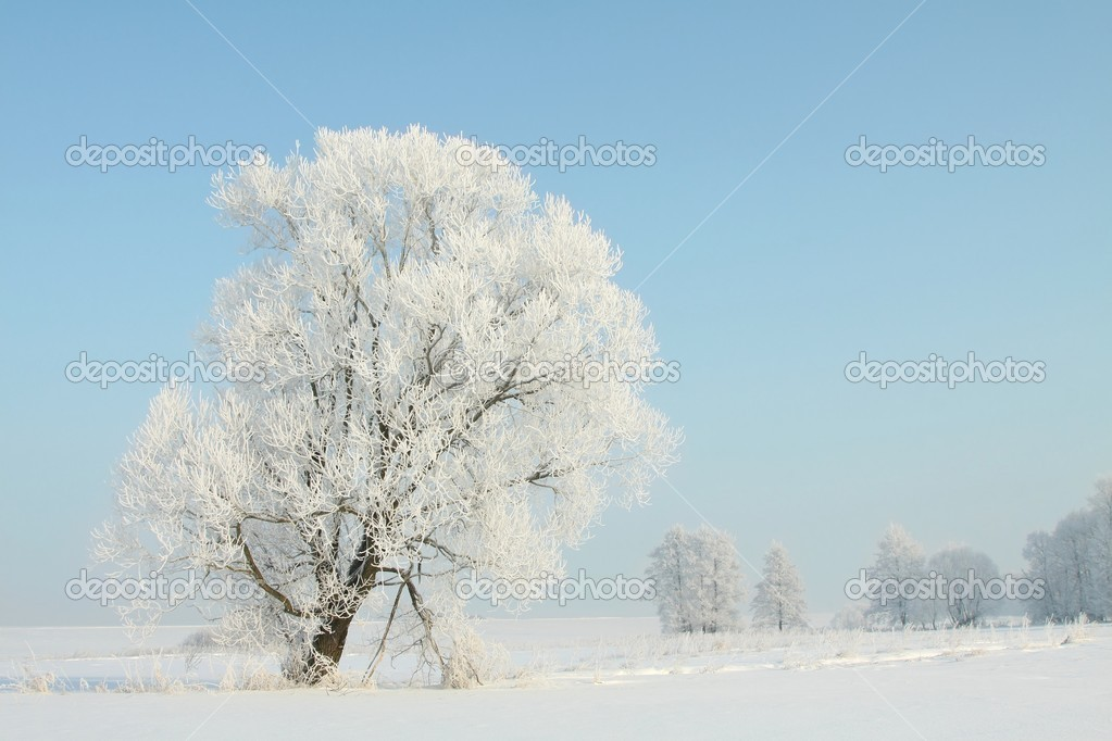 Landscape of winter tree covered with frost