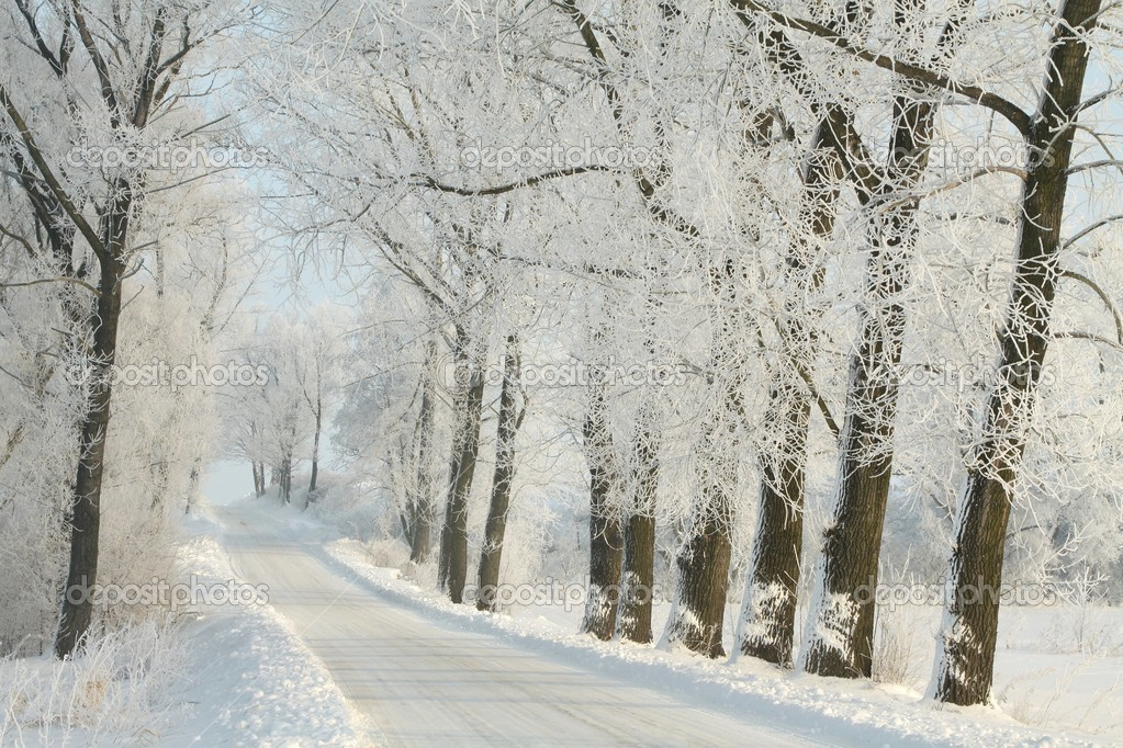 Winter rural road among frosted trees