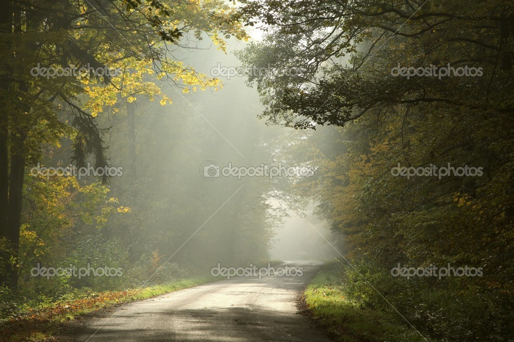 Фотообои Rural road in a foggy autumn forest at dawn