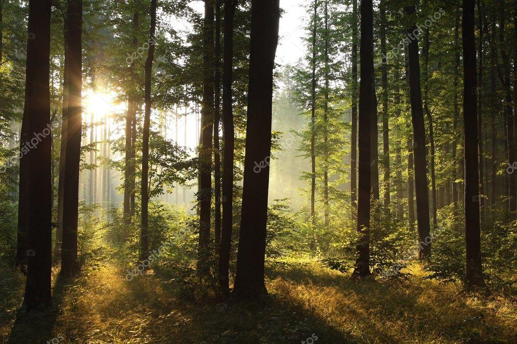 Landscape of deciduous forest at dawn