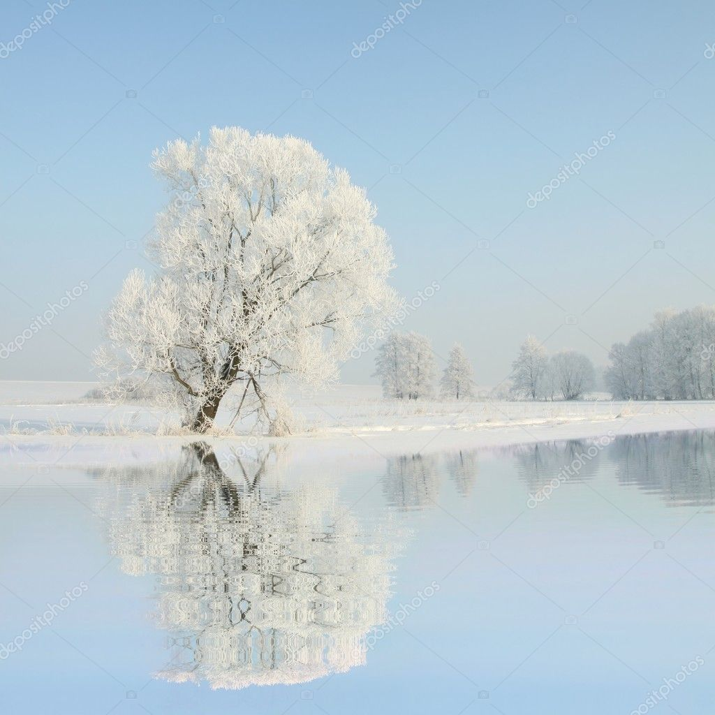 Winter landscape of frosted tree at dawn
