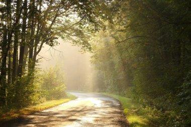 Rural lane in autumn forest at dawn