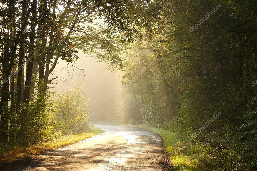 Фотообои Rural lane in autumn forest at dawn