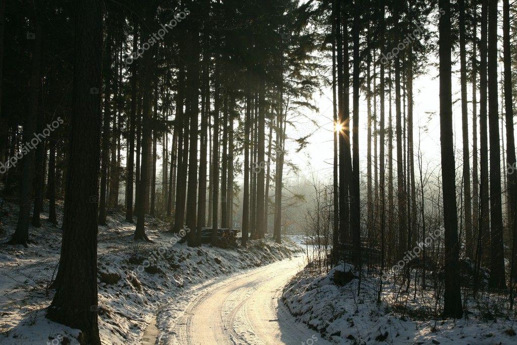 Фотообои Winter coniferous forest at dusk
