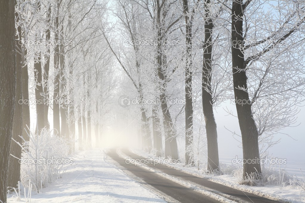 Winter lane on a foggy morning