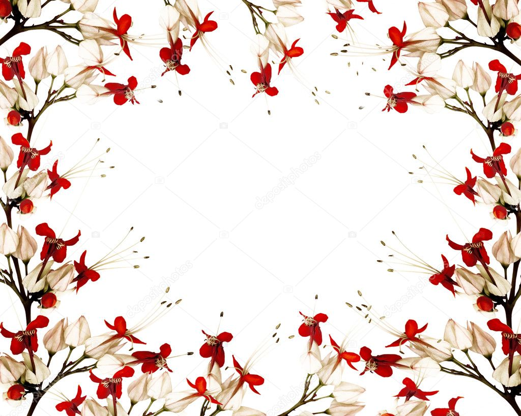 Red and black butterfly flower frame
