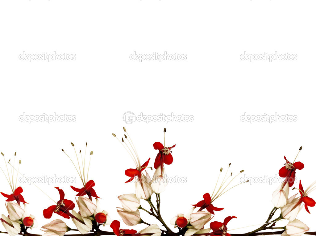 Red black and white butterfly flower border isolated with clippi