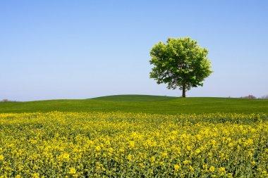 """Картина, постер, плакат, фотообои """"природа, пейзаж постеры"""", артикул 4665638"""