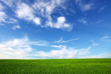 Field on a background of the blue sky stock vector