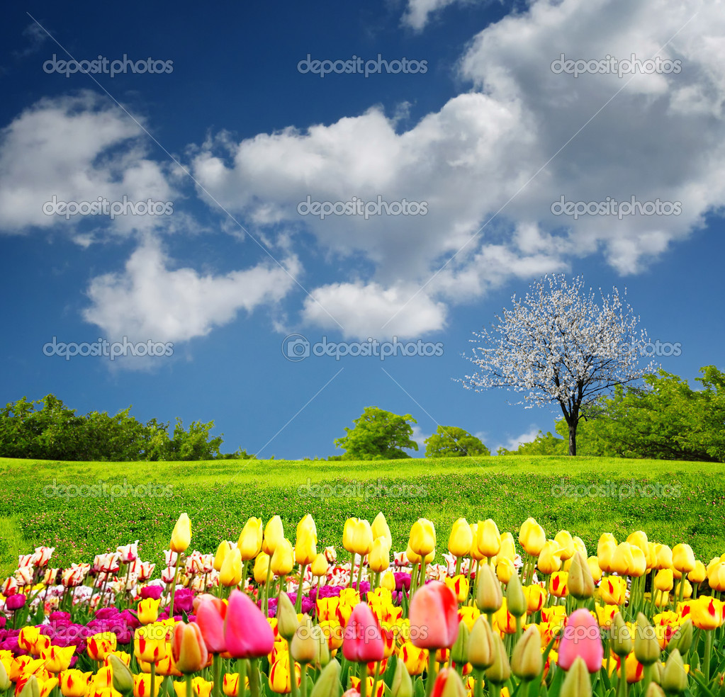 Beautiful spring field