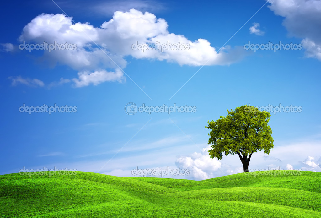 Green landscape with oak tree