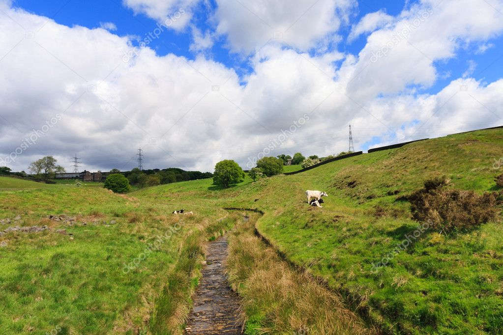 English pastures in Yorkshire