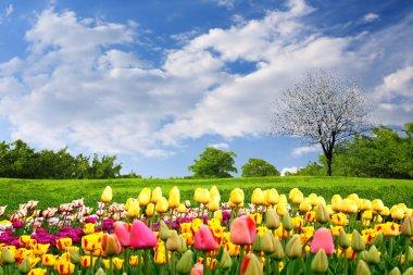 Springtime tulips stock vector