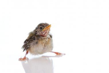 Birdysign