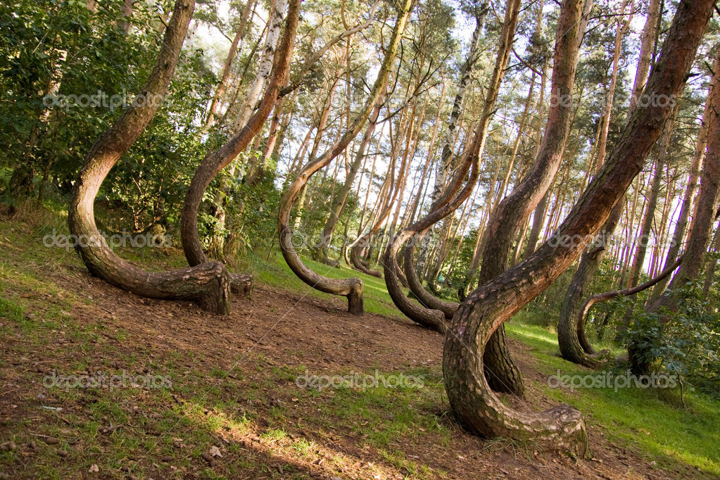 Curved forest