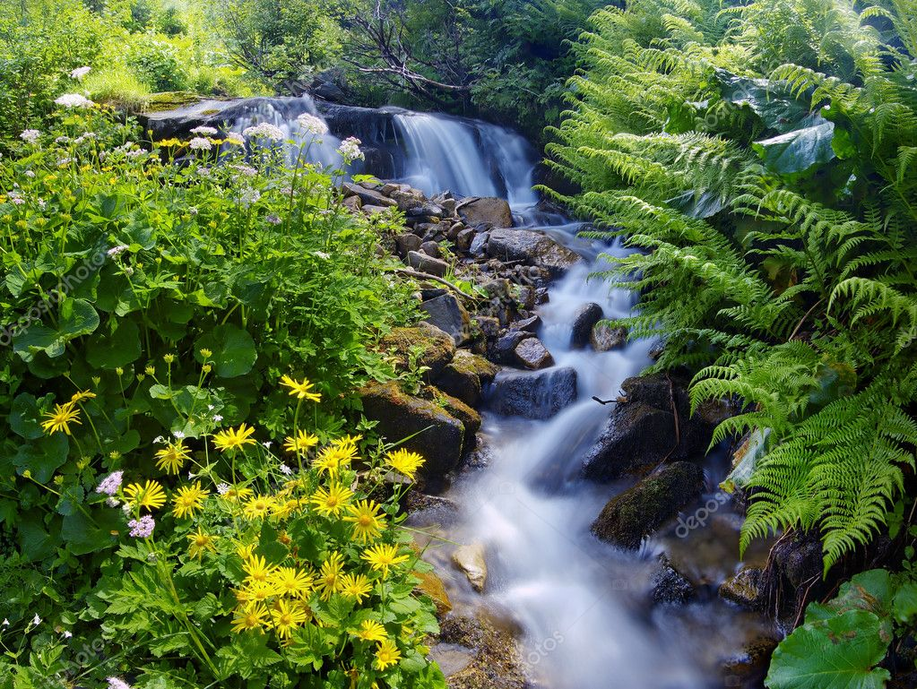 Yellow flowers near a mountain stream