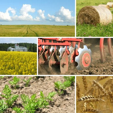 Collage with agriculture motives - tractor, fields, harvest, hay, plants stock vector