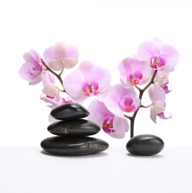 Orchid flower with stone