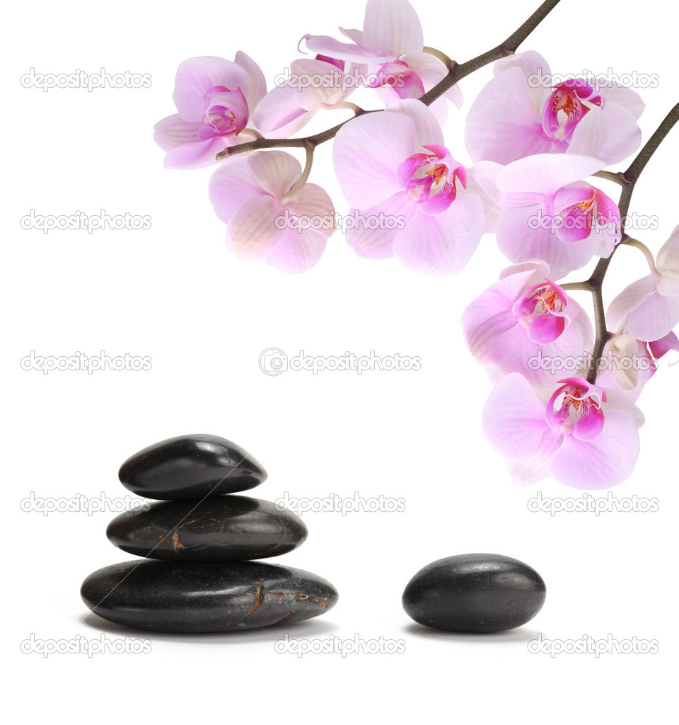 Orchid flower and stones