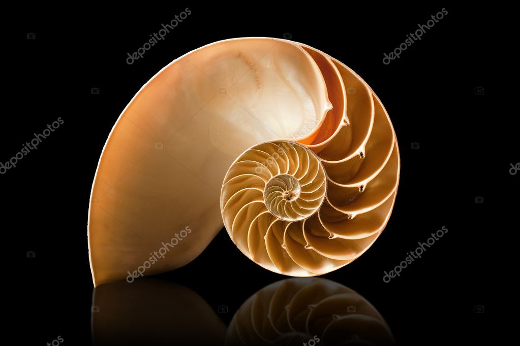 Nautilus shell on black background