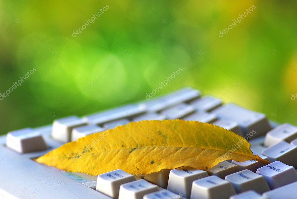 Yellow leaf on keyboard.