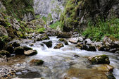 torrente alpino