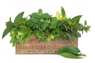 Herb leaf sprigs of rosemary, bay, oregano, golden marjoram, mint varieties, variegated and purple sage in an old rustic wooden box. stock vector