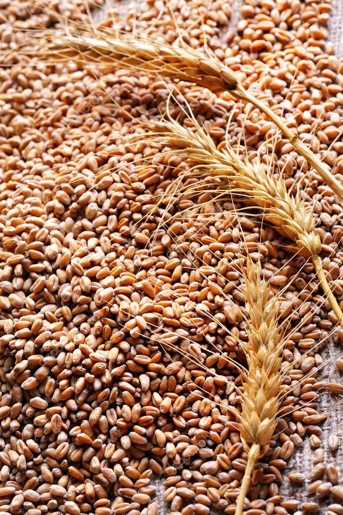 小麦种子图片_小麦种子在粗糙的材料 — 图库照片©jordache#3956910