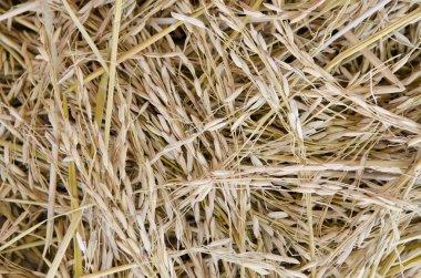 Close up shot of raw unprocessed rice