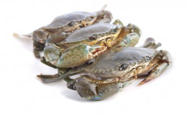 Crabs with isolated white background