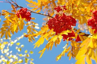 Beauty Autumn