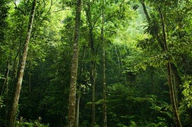 Sunlight shine thru the green forest stock vector