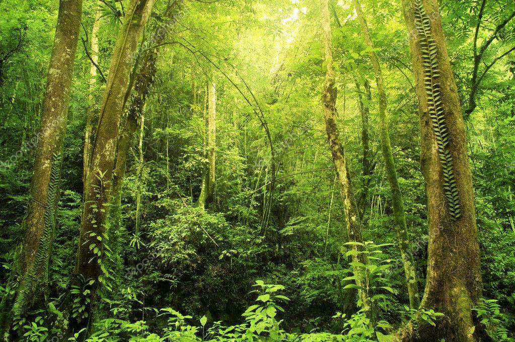 Фотообои Rain forest