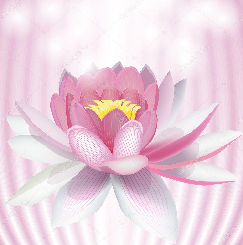 ピンクの睡蓮ベクトル イラスト ストックベクター Averych 5135184