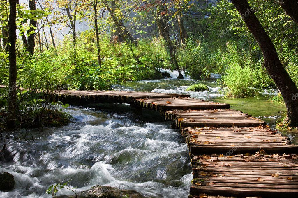 Фотообои Forest Stream Scenery