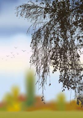 Vector image. Bent birch branches