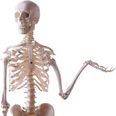 Fotografia scheletro