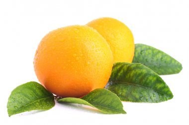 Two oranges with leaves on white