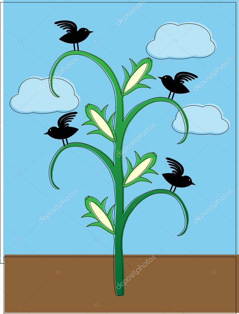 cuervos sentado en la planta de maíz abstracto compensado para ...